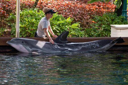 Orlando, Florida. June 17, 2019.Trainer caressing bottlenose dolphin at Seaworld 1