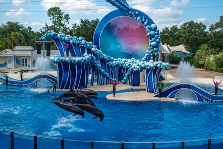 Orlando, Florida. June 23 2019. Dolphins jumping in Touch the Sky Show by Electric Ocean at Seaworld 4