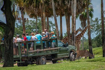 Tampa Bay, Florida. July 12, 2019. Safari truck moves away from giraffes and zebras area at Busch Gardens 2