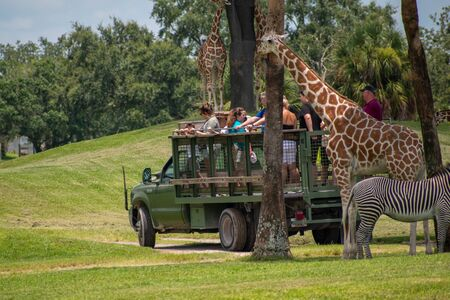 Tampa Bay, Florida. July 12, 2019. Safari truck moves away from giraffes and zebras area at Busch Gardens 1