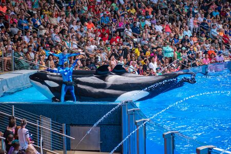 Orlando, Florida. July 18, 2019. People having fun killer killer whales in One Ocean show at Seaworld 10 Editorial