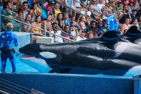 Orlando, Florida. July 18, 2019. People having fun killer killer whales in One Ocean show at Seaworld 14