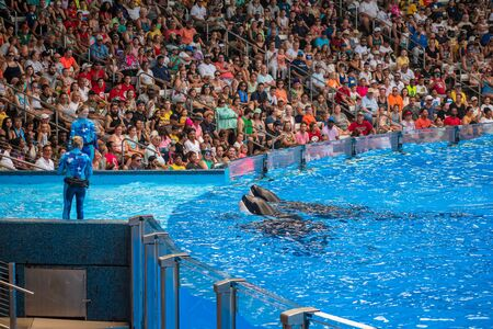 Orlando, Florida. July 18, 2019. People having fun killer killer whales in One Ocean show at Seaworld 17