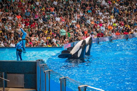 Orlando, Florida. July 18, 2019. People having fun killer killer whales in One Ocean show at Seaworld 20 Editorial