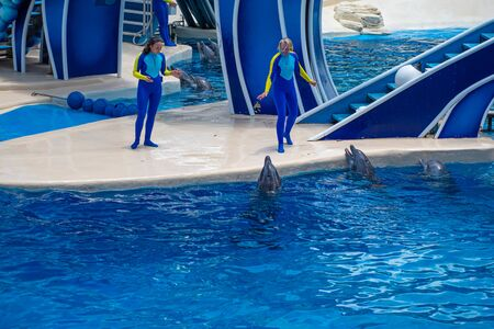 Orlando, Florida. July 18, 2019. Dolphin and trainers at Dolphin Days show at Seaworld 5