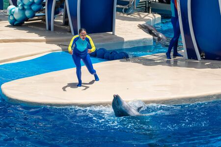 Orlando, Florida. July 18, 2019. Dolphin and trainers at Dolphin Days show at Seaworld 8 Editorial