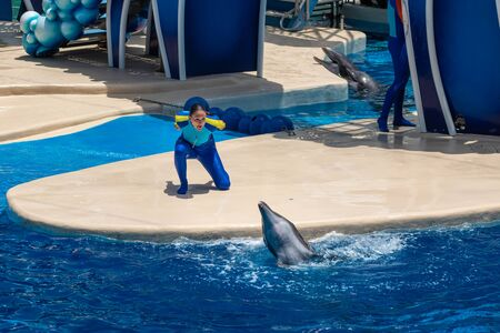 Orlando, Florida. July 18, 2019. Dolphin and trainers at Dolphin Days show at Seaworld 9