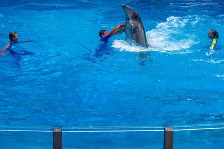 Orlando, Florida. July 18, 2019. Dolphin dancing with trainer at Seaworld.