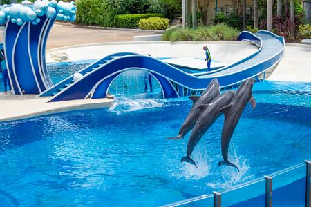 Orlando, Florida. July 18, 2019. Dolphins jumping in Dolphin Days show at Seaworld 1