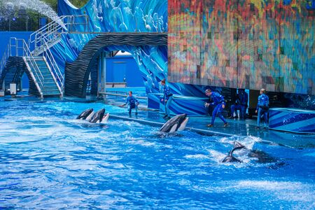 Orlando, Florida. July 18, 2019. Killer whales waiting for fish and trainers orders in One Ocean show at Seaworld 1
