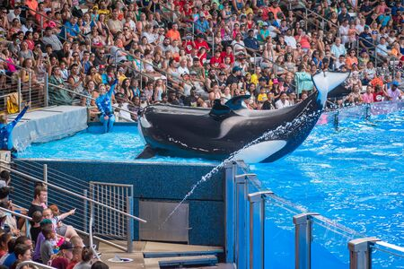 Orlando, Florida. July 18, 2019. People enjoying One Ocean show with majestic killer whales at Seaworld 2