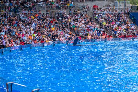 Orlando, Florida. July 18, 2019. People having fun majestic killer whales in One Ocean show at Seaworld 3