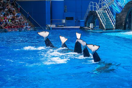 Orlando, Florida. July 18, 2019. People having fun majestic killer whales in One Ocean show at Seaworld 8 Editorial