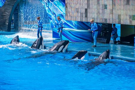 Orlando, Florida. July 18, 2019. People having fun majestic killer whales in One Ocean show at Seaworld 9 Stock Photo - 131498146