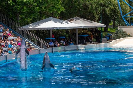 Orlando, Florida. July 29, 2019. Dolphins coming out of the water in Dolphin Days show at Seaworld.
