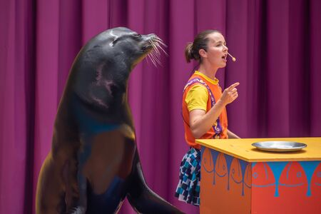 Orlando, Florida. July 26, 2019. Lovable sea lion plays with smiling coach in Sea Lion High show at Seaworld 3 報道画像