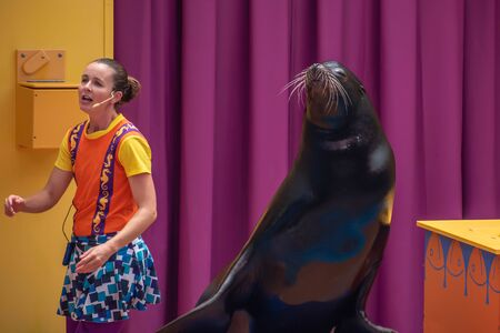 Orlando, Florida. July 26, 2019. Lovable sea lion plays with smiling coach in Sea Lion High show at Seaworld 5 報道画像