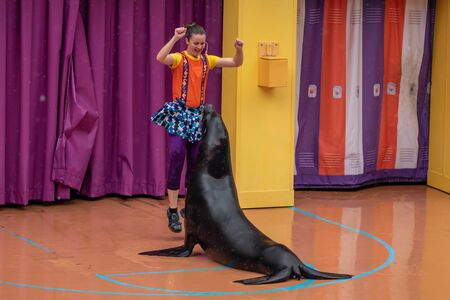 Orlando, Florida. July 26, 2019. Lovable sea lion plays with woman coach in Sea Lion High show at Seaworld 1 報道画像