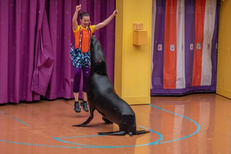 Orlando, Florida. July 26, 2019. Lovable sea lion plays with woman coach in Sea Lion High show at Seaworld 2 報道画像