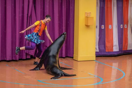 Orlando, Florida. July 26, 2019. Lovable sea lion plays with woman coach in Sea Lion High show at Seaworld 3 報道画像