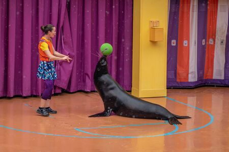 Orlando, Florida. July 26, 2019. Lovable sea lion plays with woman coach in Sea Lion High show at Seaworld 4