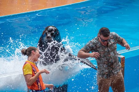 Orlando, Florida. July 26, 2019. Lovable sea lion splashing the public man with his fin in Sea Lion High show at Seaworld 4 報道画像