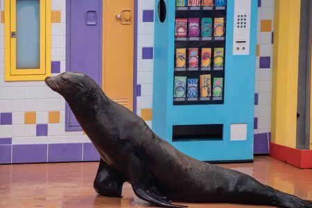 Orlando, Florida. July 26, 2019. Nice sea lion in Sea Lion High show at Seaworld.