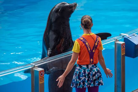 Orlando, Florida. July 26, 2019. Nice sea lion looking at a coach in Sea Lion High show at Seaworld (35)