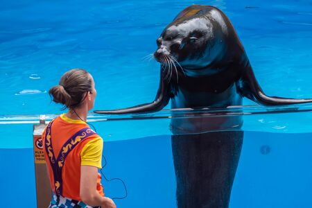 Orlando, Florida. July 26, 2019. Nice sea lion looking at a coach in Sea Lion High show at Seaworld.