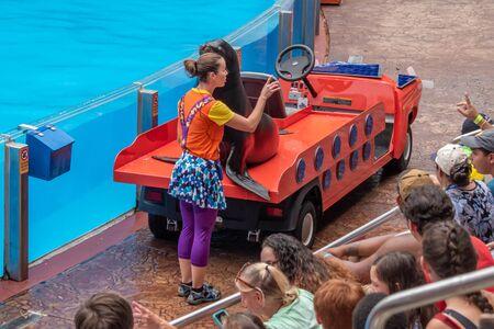 Orlando, Florida. July 26, 2019. Nice sea lion on colorful car in Sea Lion High show at Seaworld. (2)
