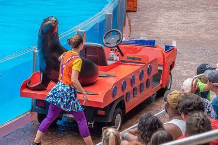 Orlando, Florida. July 26, 2019. Nice sea lion on colorful car in Sea Lion High show at Seaworld.
