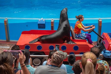 Orlando, Florida. July 26, 2019. Sea lion entering the show with woman trainer in colorful car in Sea Lion High show at Seaworld 1
