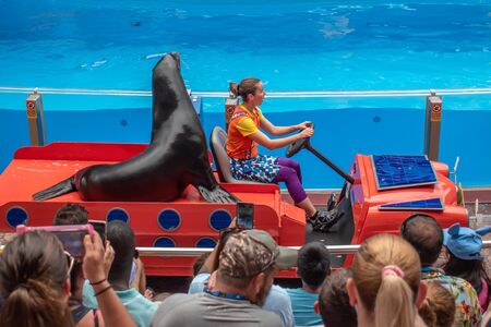 Orlando, Florida. July 26, 2019. Sea lion entering the show with woman trainer in colorful car in Sea Lion High show at Seaworld 2