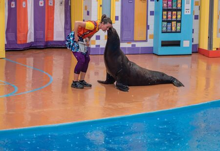 Orlando, Florida. July 26, 2019. Coach listening to sea lion on rainy day backgroundin Sea Lion High show at Seaworld.
