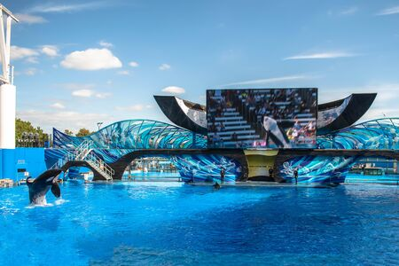 Orlando, Florida. November 22. 2019. Spectacular killer whale jumping in One Ocean Show at Seaworld 34 에디토리얼
