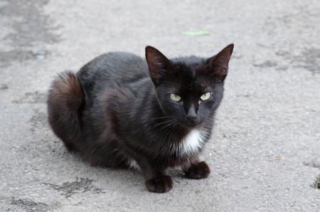 Black cat Banco de Imagens - 44513240