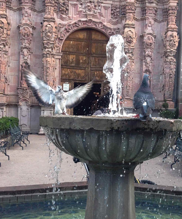 Pigeons in the source