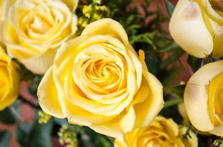 ornamental bush: Yellow Roses