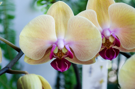 adapted: Orchids