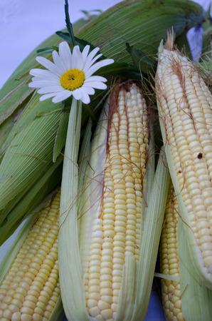 corn flower: Corn with margarita