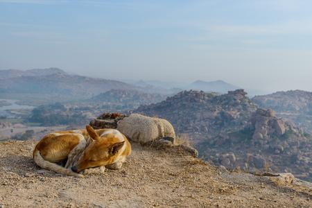 A dog slipping at the top of Hampi, Karnataka, India Banque d'images