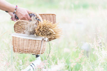 Grass flowers in basket bicycle.