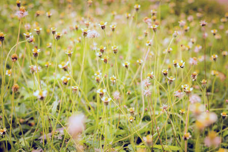 grass flowers for background. Archivio Fotografico