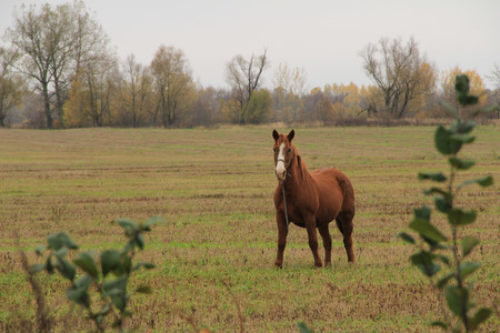 the beautiful brown horse costs on a slanted field