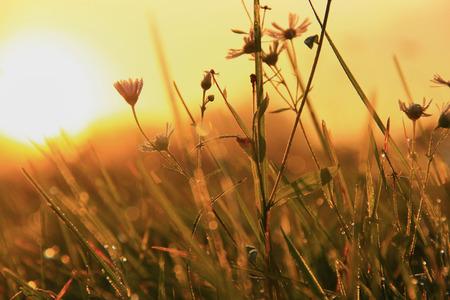 magic summer background of a grass at dawn photo