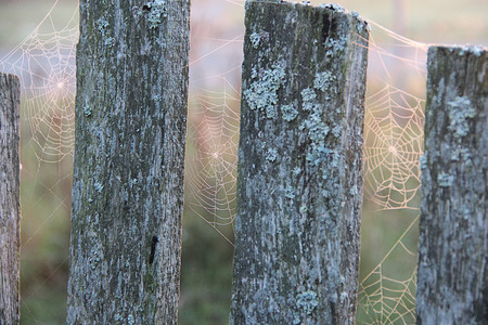 web on an old fence with a moss early in the morning        photo