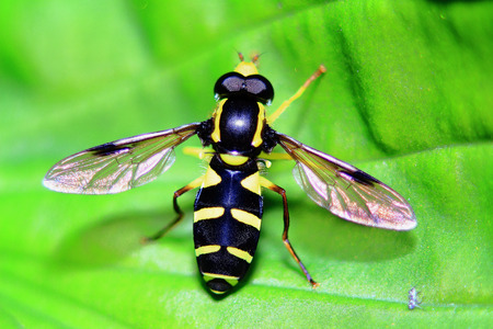 the little wasp sits on a green leaf, being heated on the sun Banco de Imagens