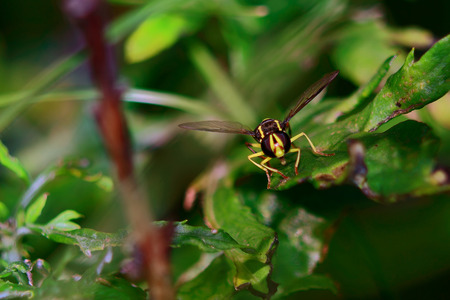 summer day with the color of the fly wasp sitting in a thicket of grass, photo-hunting photo