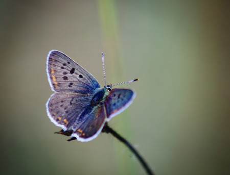 unusually: on a gray background with thin stalk sits a little unusually colorful and beautiful butterfly Stock Photo