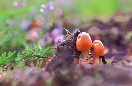 A couple of little mushrooms broke through the peat layer, striving for the light.